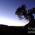 Juniper Tree At Dawn by John Shaw
