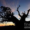 Juniper Tree, Canyonlands National Park by John Shaw