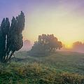 Juniper Trees In Early Morning Fog  by Martin Liebermann