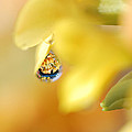 Just A Drop Of Spring by Susan Capuano