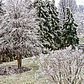 Ice Coating Trees And Lawn In A Back Yard by William Kuta