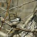 Just A Little Birdie by Jeff Swan