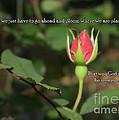 Just Bloom by Sandra Clark