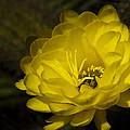 Just Call Me Mellow Yellow  by Saija  Lehtonen