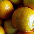 Just Citrus by Margaret Newcomb