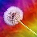 Just Dandy Rainbow by Andee Design