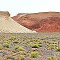 Just Desert by Marilyn Diaz