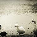 Just Duckie  by Debra Forand