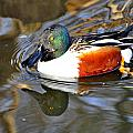 Just Ducky by Marty Koch