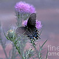 Just Fluttering By by Francie Davis