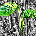 Just Green 2 By Diana Sainz by Diana Raquel Sainz