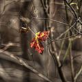 Just Hangin On by Steve Gravano