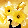 Just Plain Daffy 1 - Flora - Spring - Daffodil - Narcissus - Jonquil by Andee Design