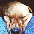 Just Taking A Nap by Rachel Barrett