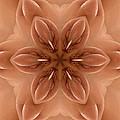 K7701c Sexual Mandala For Erotic Spirituality by Chris Maher