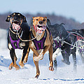 K9 Athletes by Mircea Costina Photography