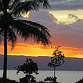 Kaanapali Sunset by Happy Toad