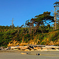Kalaloch Beach by Greg Norrell