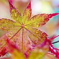 Kaleidoscope by Caitlyn  Grasso