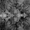 Kaleidoscope by Gina Herbert