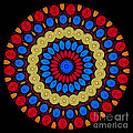 Kaleidoscope Of Colorful Embroidery by Amy Cicconi