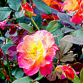Kaleidoscope Of Roses by Dawn  Gagnon