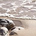 Kamaole Beach Rock by Amy Lee