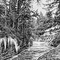 Kanaka Creek Icicles by Paul W Sharpe Aka Wizard of Wonders