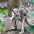 Kangaroo by Armani Ballesteros