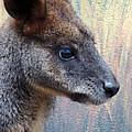 Kangaroo Potrait by Munir Alawi