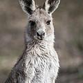 Kangaroo by Steven Ralser