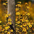 Kansas Bouquet by Douglas Stucky