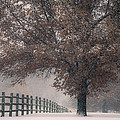 Kansas Snowstorm - Tree And Fence by Scott Sewell