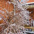 Karma In Winter by Steve Harrington