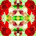 Karnation Kaleidoscope by Marianne Dow