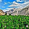 Kashmir Field by Florian Rodarte