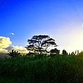 Kauai Dusk by Catherine Rogers