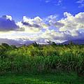 Kauai Grass by Catherine Rogers