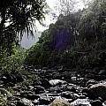 Kauai River by Kelley Belisle