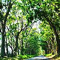 Kauai Trees by Catherine Rogers