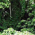 Kauai Trees by James Kramer