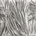 Kauri Giant by Arthur Right