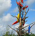 Kayak Tree by Erika Weber