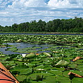 Kayaking Among The Waterlillies by James Peterson