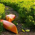 Kayaks At The Cottage by Frank Falzett