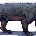 Kayentatherium, A Mammal-like by H. Kyoht Luterman