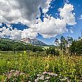 Kebler Pass Meadow by Jeff Stoddart