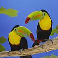 Keel-billed Toucan Pair by Mitsuyoshi  Tatematsu