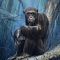 Keeper Of The Congo by Dreyer Wildlife Print Collections