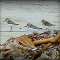 Kelp Standing Visitors by Susan Garren
